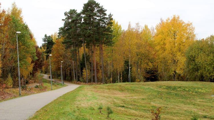 Linnés arboretum