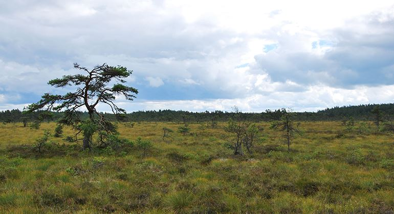 Länsstyrelsen, Naturreservat Fiolenområdet