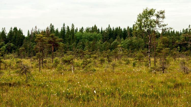 Tobias Ivarsson, Naturreservat Fiolenområdet