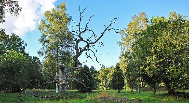 Länsstyrelsen, Naturreservat Lunden