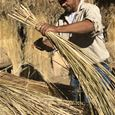 THE MYSTERIES OF VETIVER