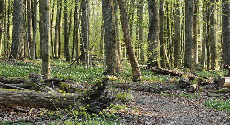 Länsstyrelsen, Naturschutzgebiet Bokhultet