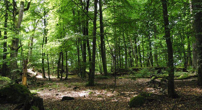 Länsstyrelsen, Nature reserve Bokhultet