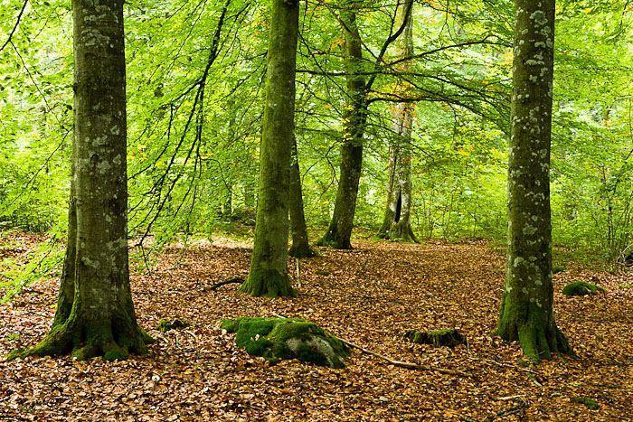 Naturschutzgebiet Bokhultet