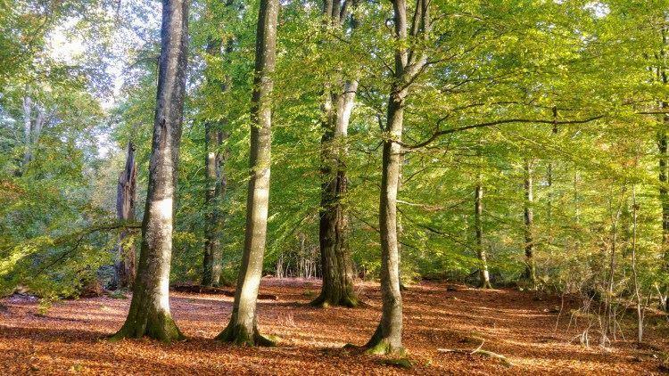 Nature reserve Bokhultet