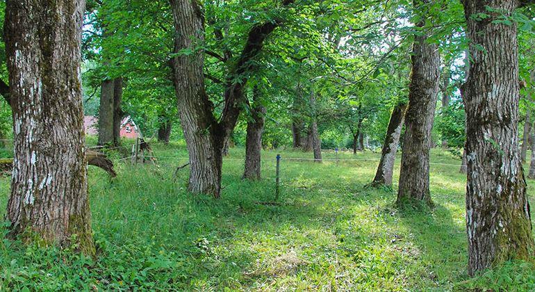 Länsstyrelsen, Das Naturreservat Braås Park
