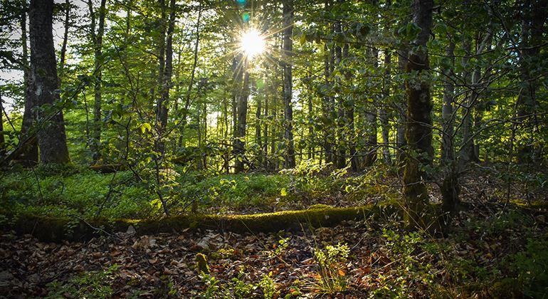 Länsstyrelsen, Nature reserve Gårdsby och Hemmesjö Bökeskog