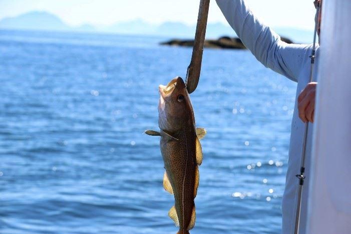 Fishing trip from Svolvær - Go2Lofoten
