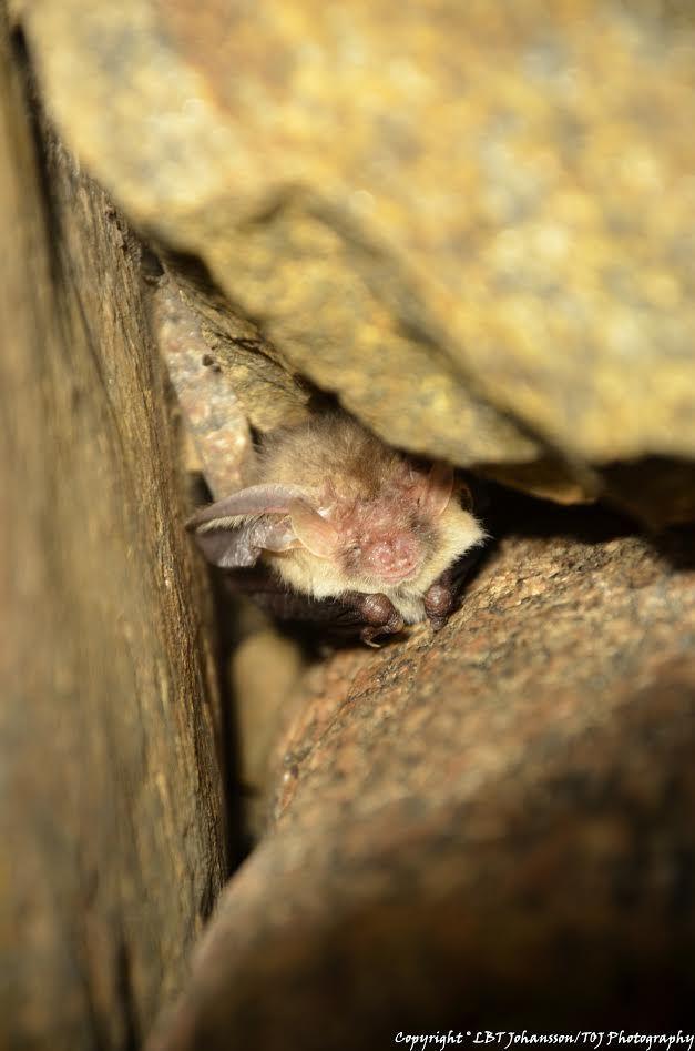 Bat-night