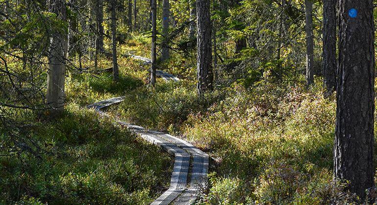 Länsstyrelsen, Nature reserve Helgö