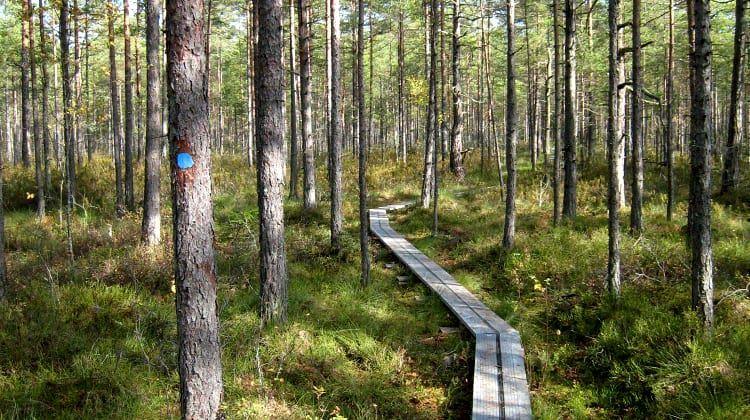 Naturreservat Helgö