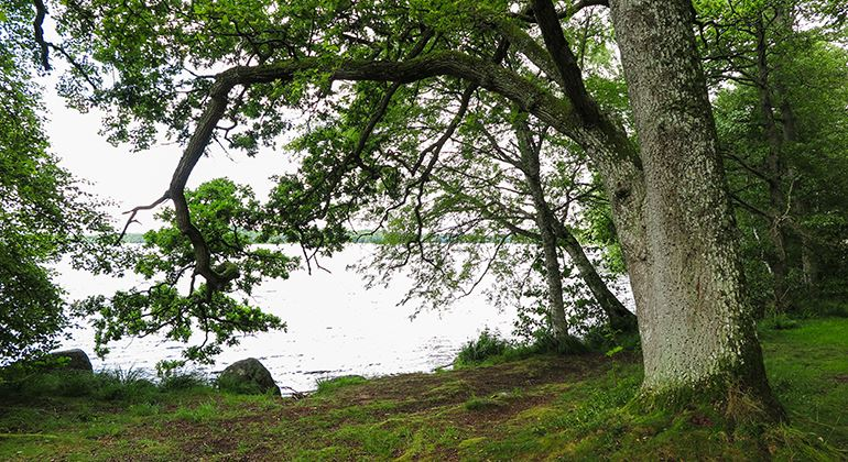 Länsstyrelsen, Naturschutzgebiet Kronoberg