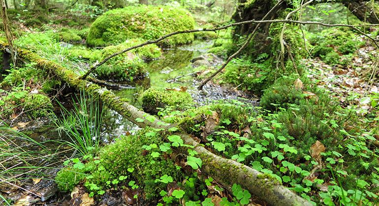 Länsstyrelsen, Naturreservat Kronoberg