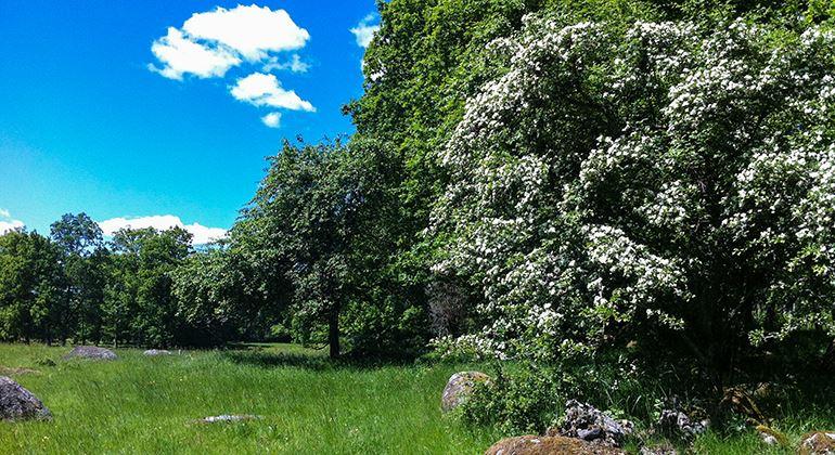 Länsstyrelsen, Naturschutzgebiet Osaby