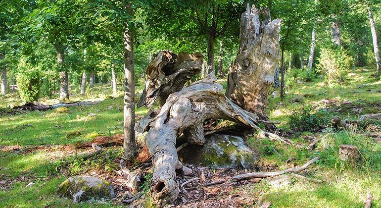 Länsstyrelsen, Naturschutzgebiet Sjösås Äng