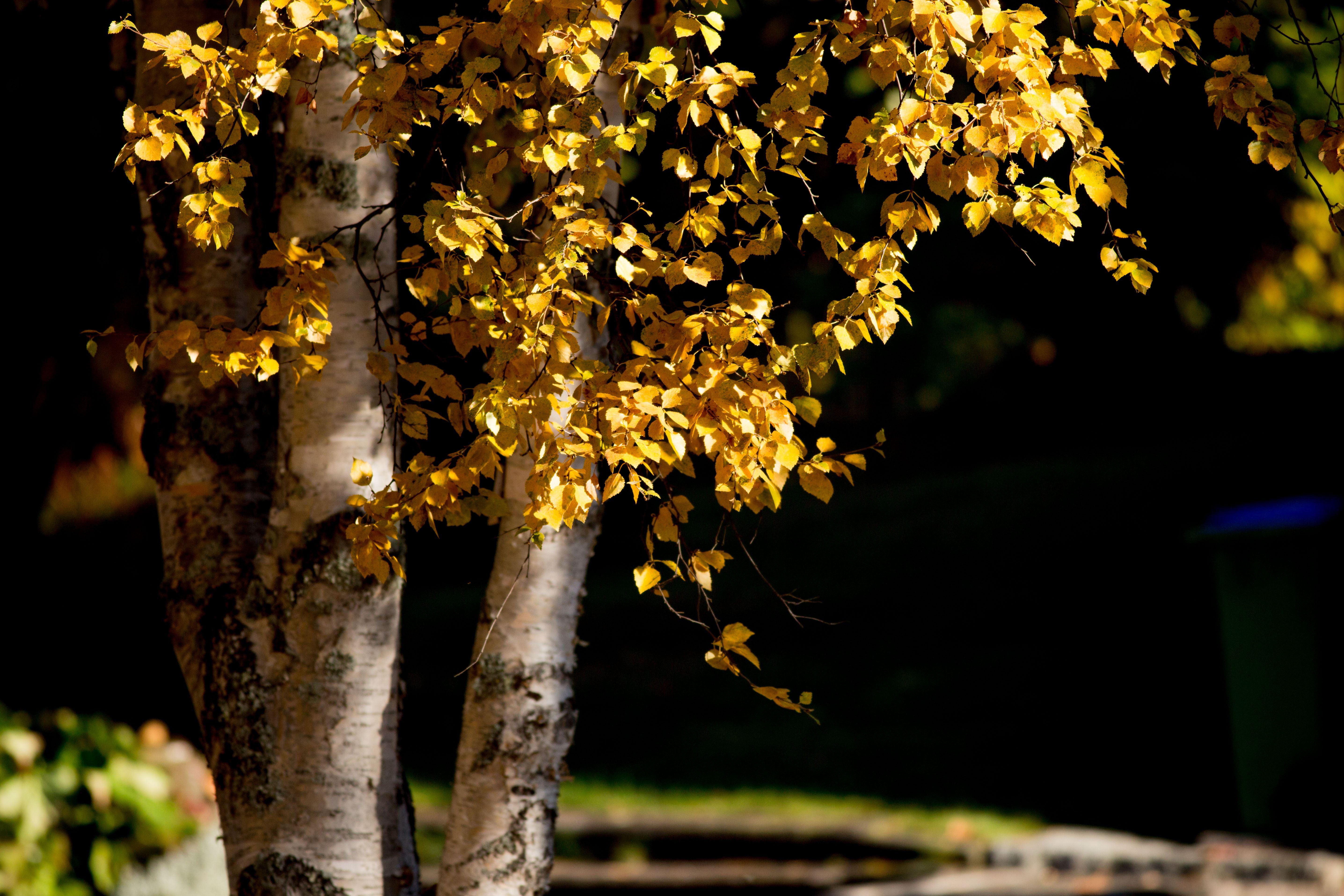 www.ricke.se,  © Malå kommun, Dagdans på Malåborg