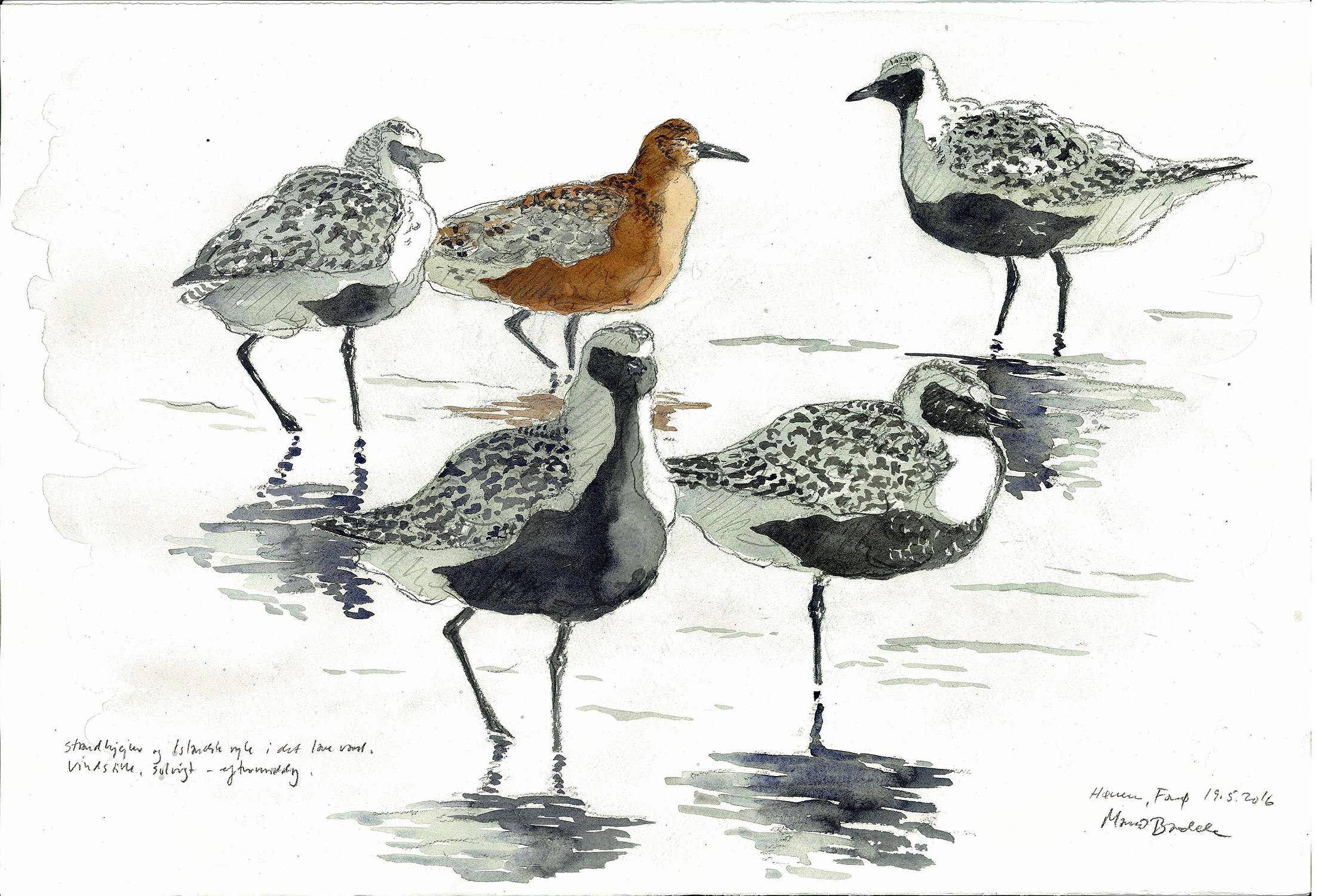 Kunst, fugle og Vadehav