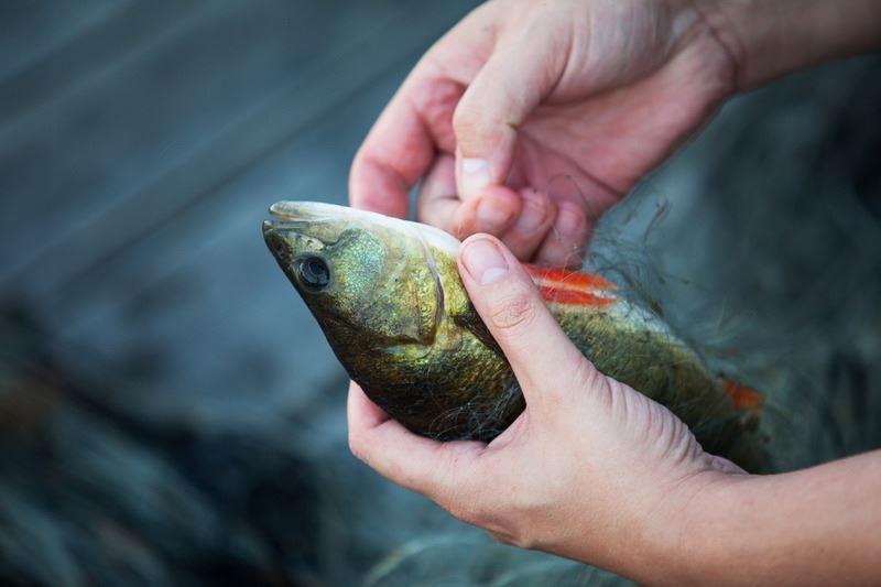 Fiskekort Tengsöda