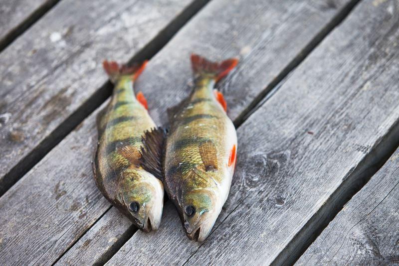 Fiskekort Dånö