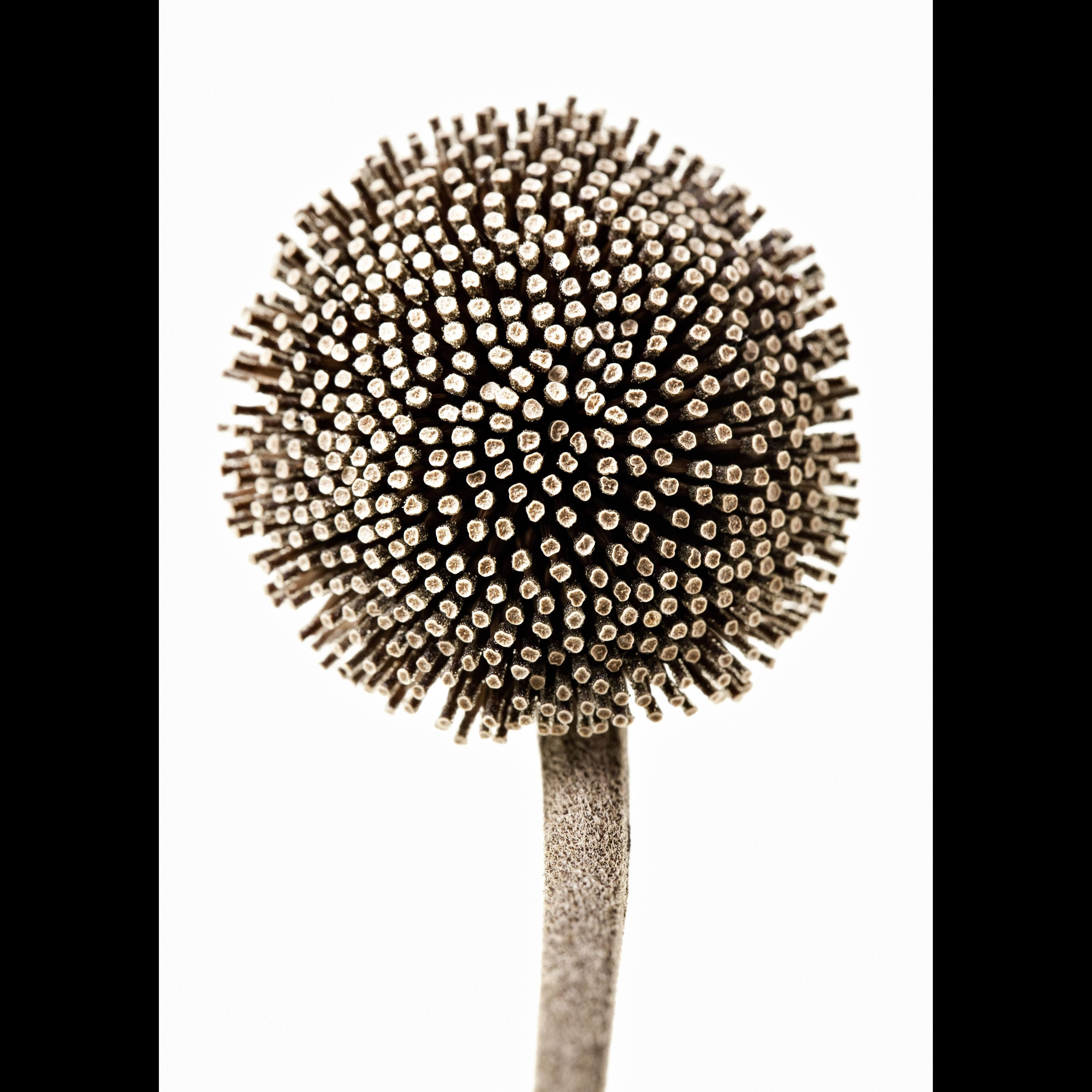 Flora supersum – Lena Granefelt
