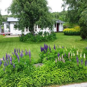Cottage with 6 beds in lovely Sandviken