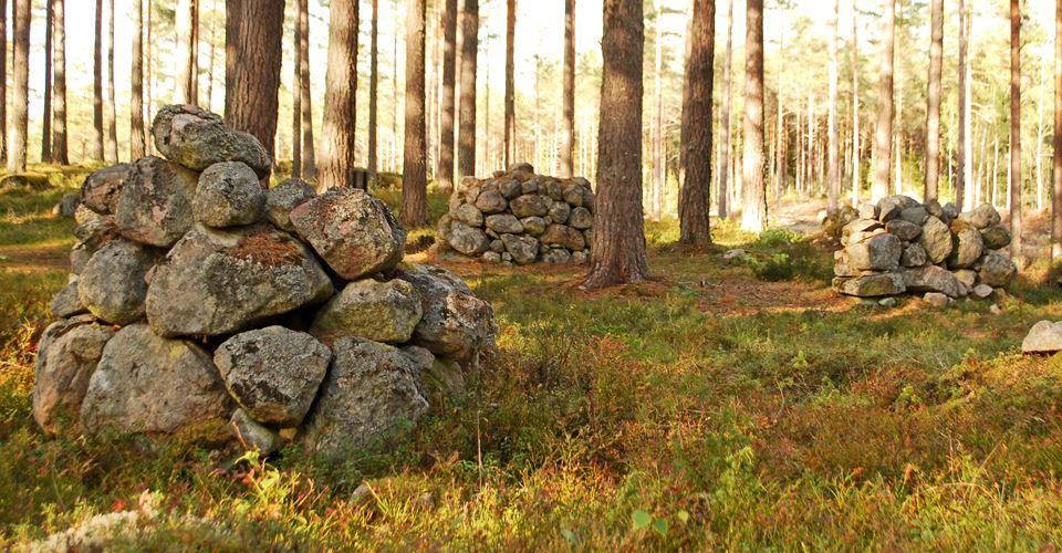 Stenriket i Björkesnäs - Nyodlingen på Hemskogen