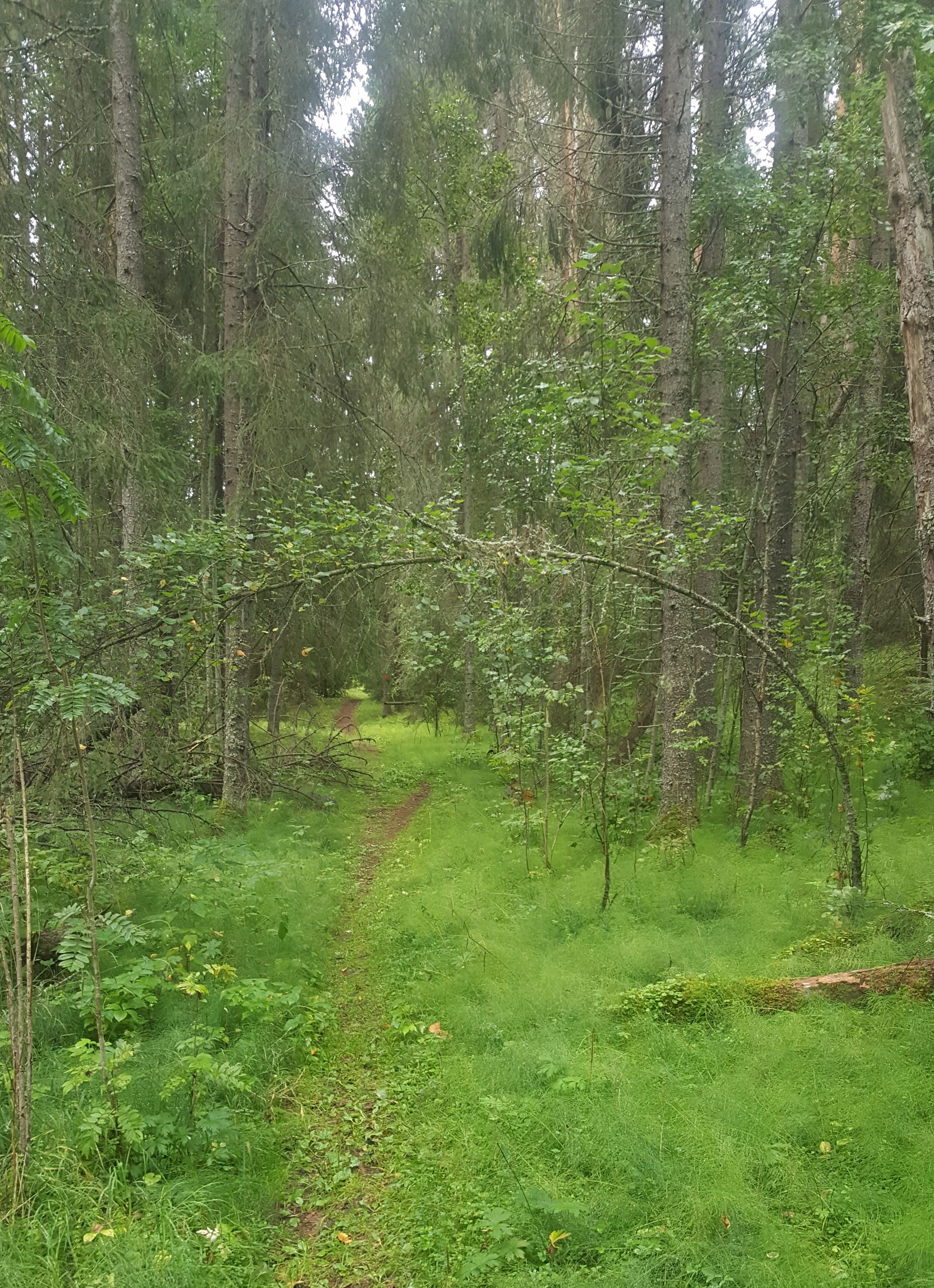 Enån - naturreservat