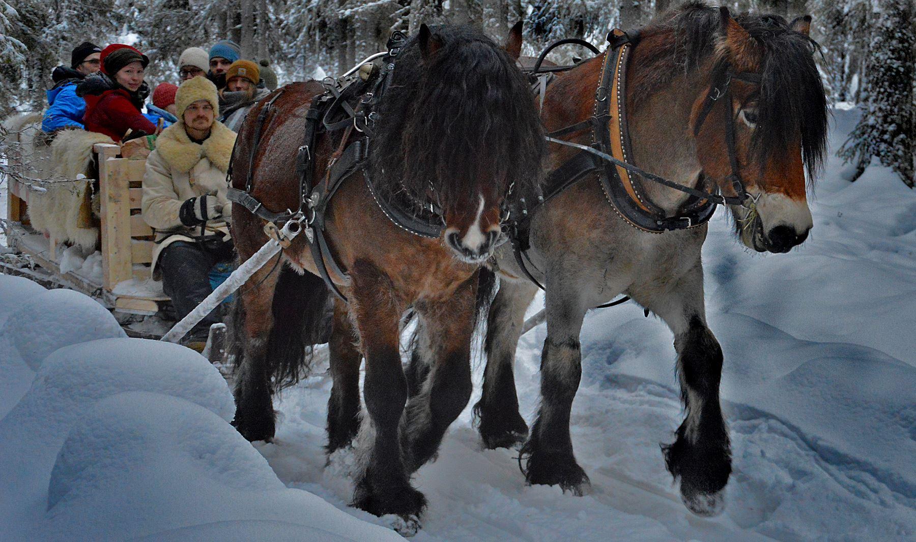 Nordlichter vom Pferdeschlitten aus erleben