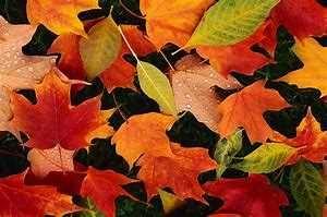 Novemberfesten