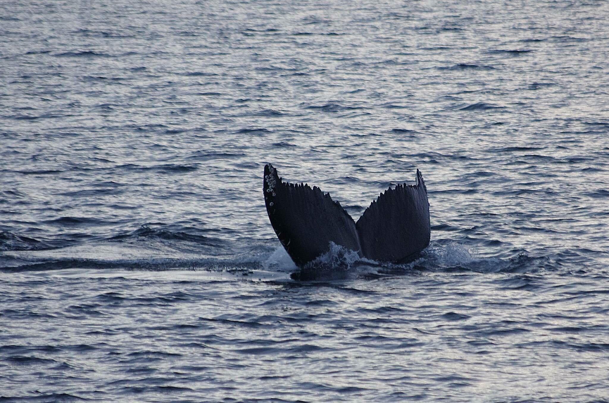 Fjord & Whale Safari 3 hours - Nord Ekspedisjon