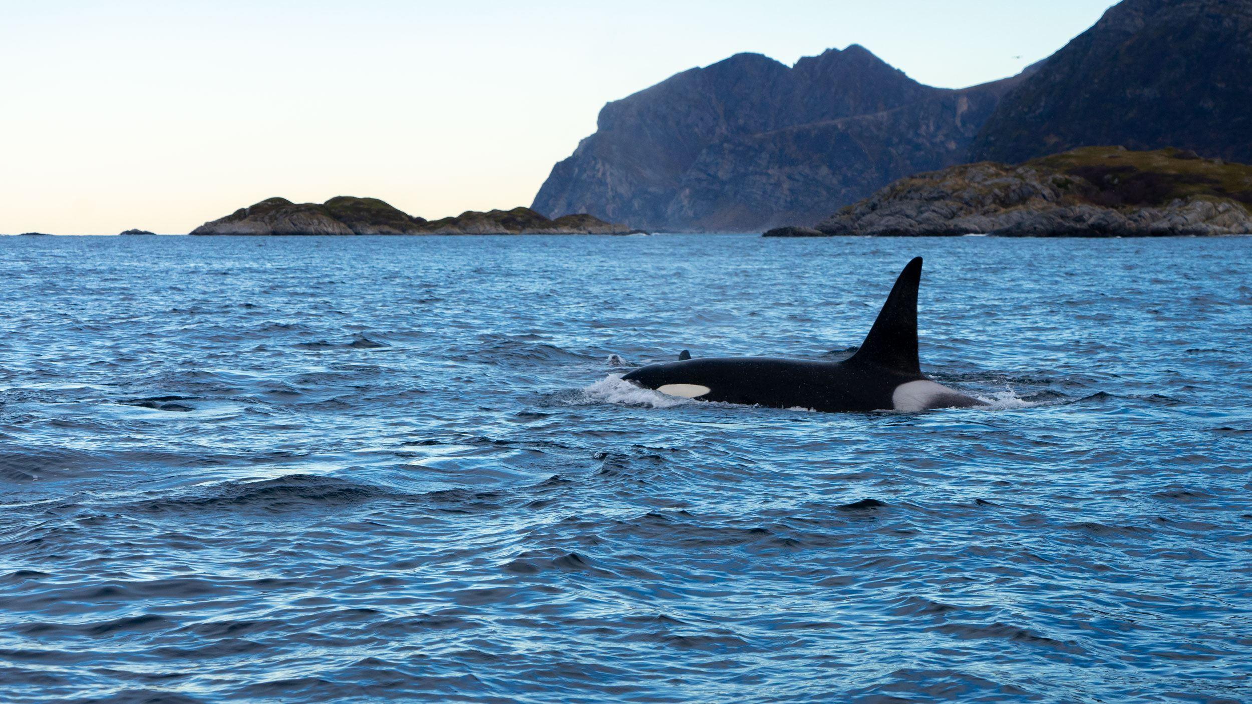 Lyngen Experience,  © Lyngen Experience, Whalesafari - Lyngen Experience