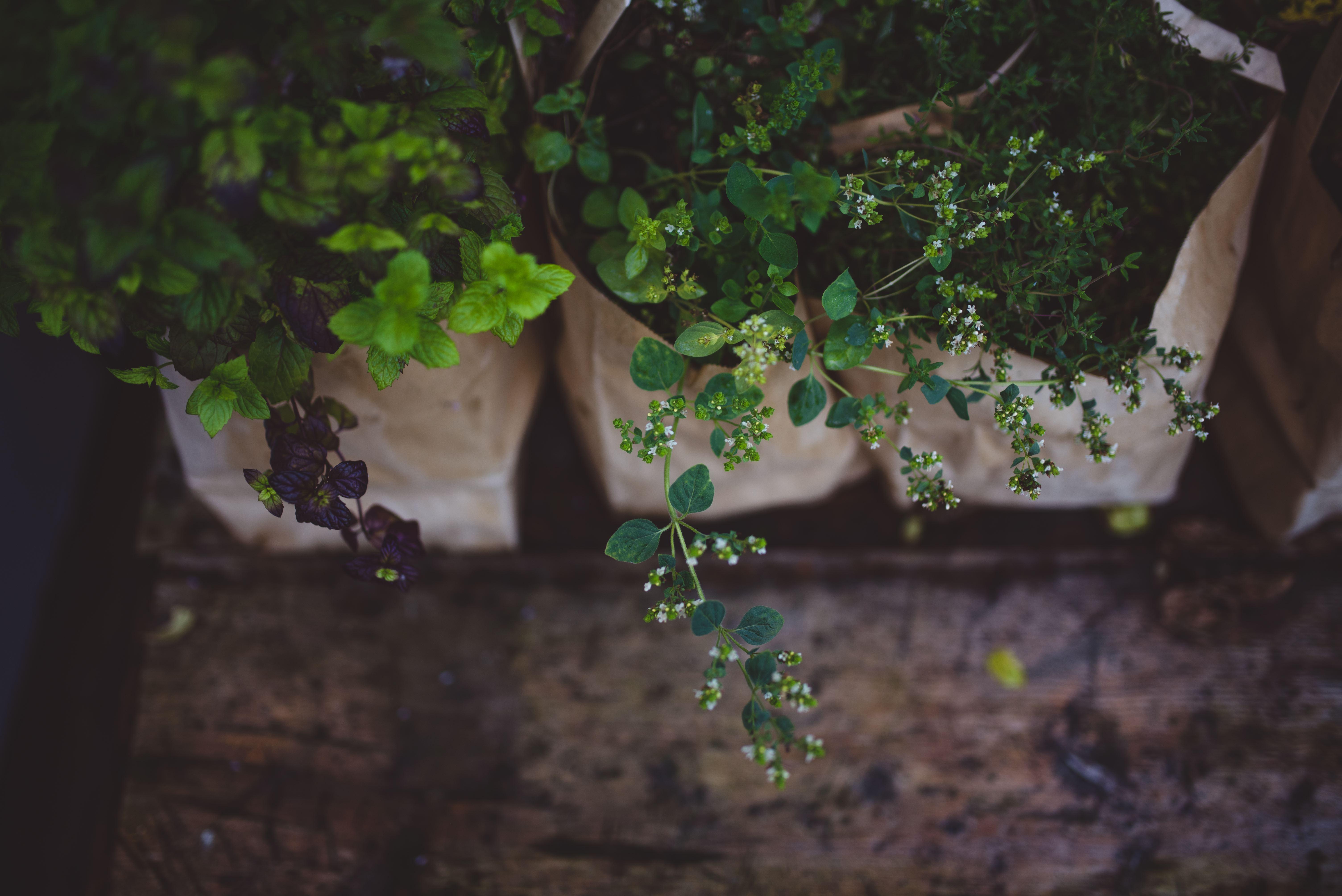 Fotoriet,  © Til Elise Fra Marius, Restaurant Til Elise fra Marius