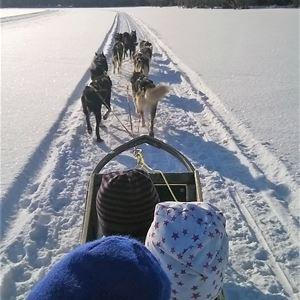 Ann,  © Ann, Hundspann Harsagården