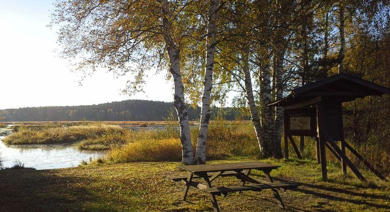 Länsstyrelsen Gävleborg,  © Länsstyrelsen Gävleborg, Vid Ålsjön kan du sätta dig och fika alldeles vid strandkanten och sedan följa spången bort längs sjön