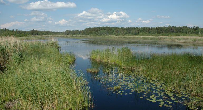 Länsstyrelsen Gävleborg,  © Länsstyrelsen Gävleborg, Lake Lugnesjön Natural Preserve