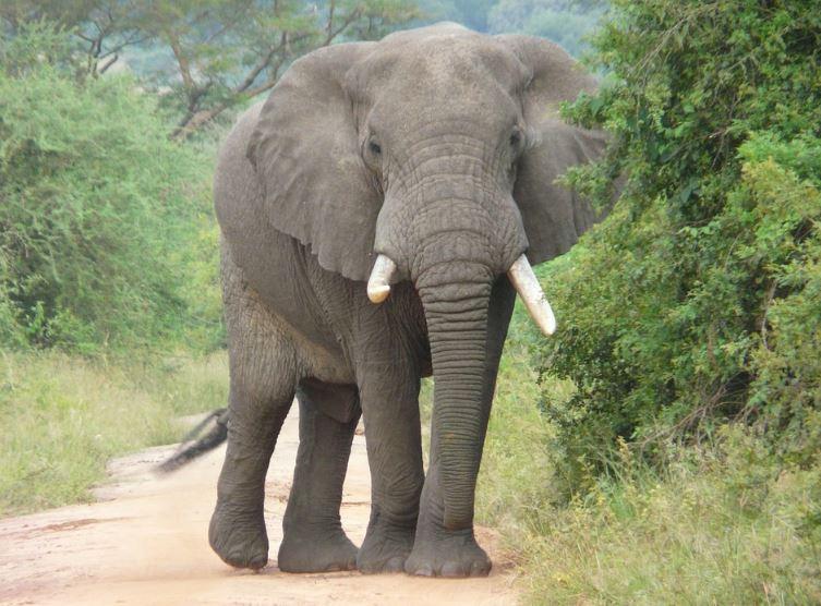Föreläsning - Från spindlar till elefanter i Sydafrika