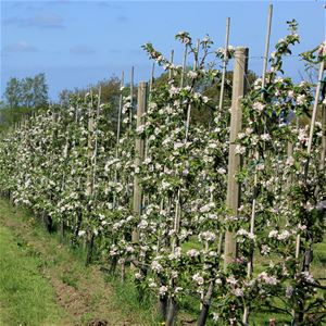 Äppelblomssafari - Inställt pga Covid-19