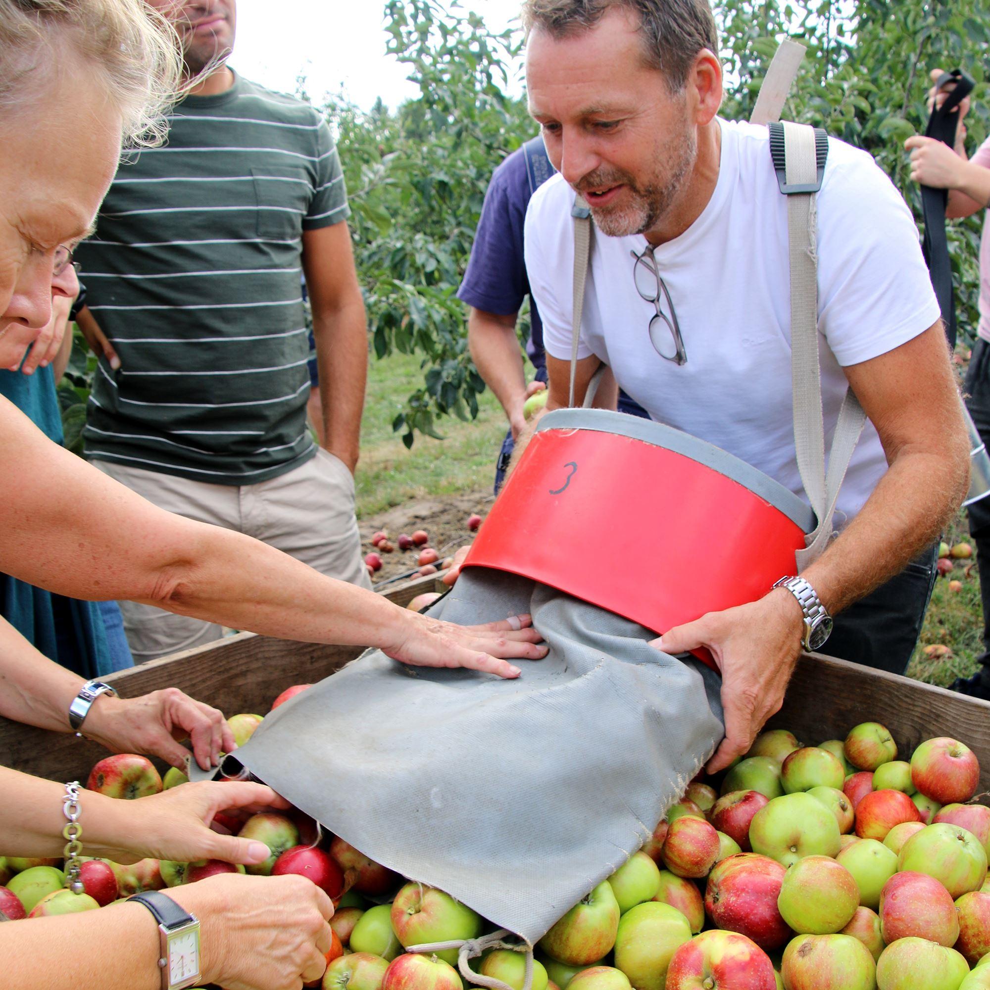 Äppelsafari med äppelplockning