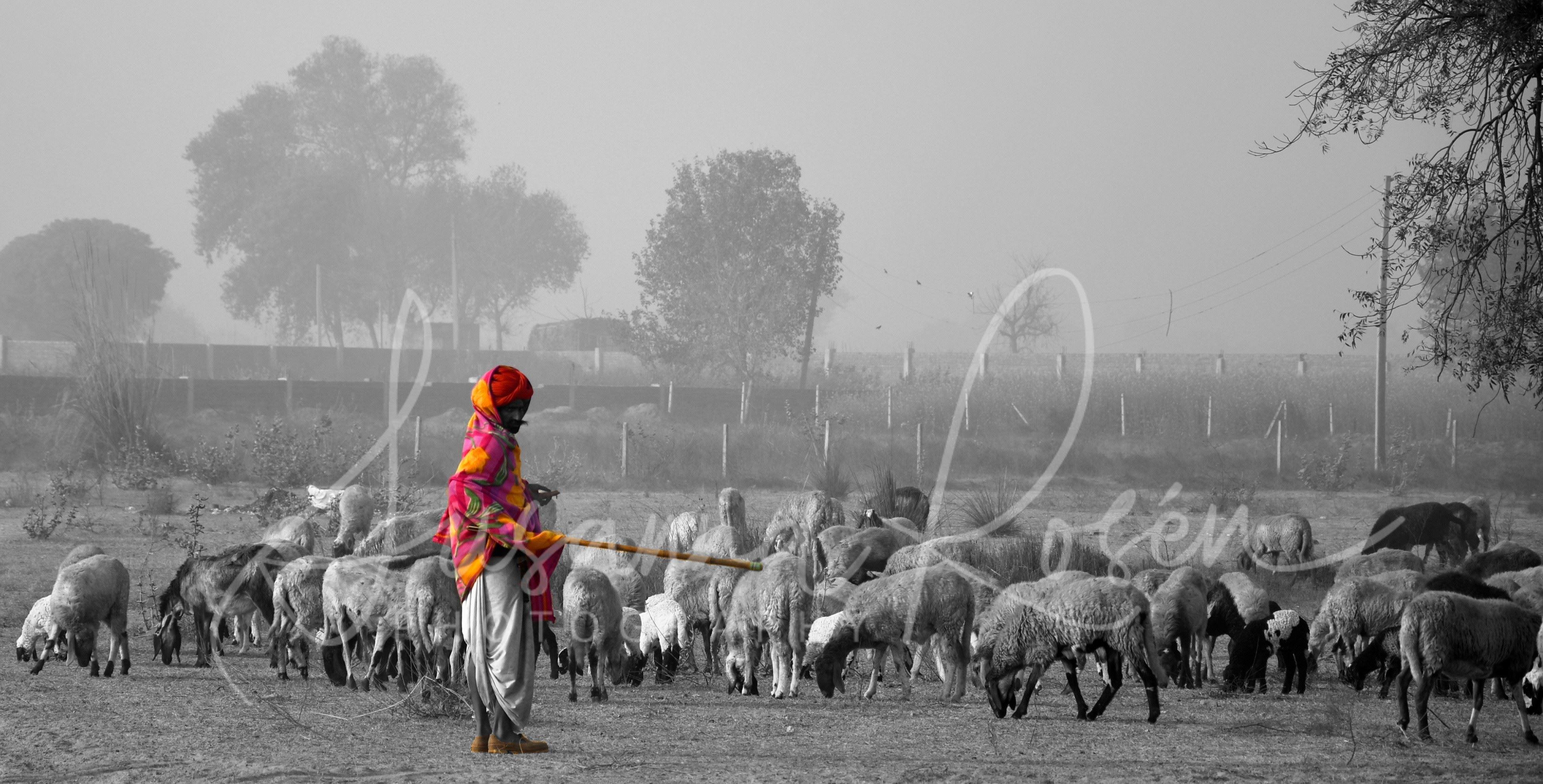 Susanna Rosén, Susanna Rosén, Abbekås, visar färgstarka bilder från Indien.