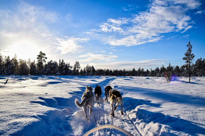 Hundekjøring vinter - BIRK