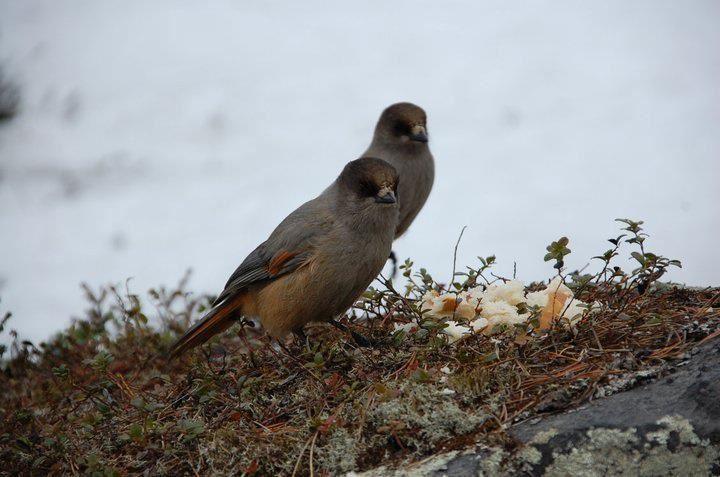 Fototur for fuglefotografer - Myrbekken
