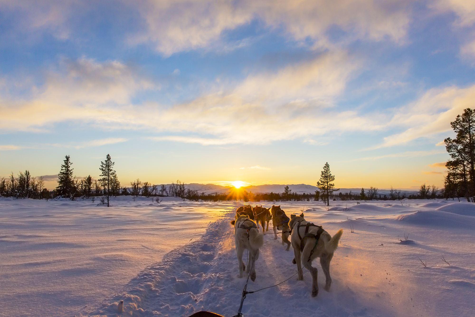 Nordlysjakt med hundekjøring