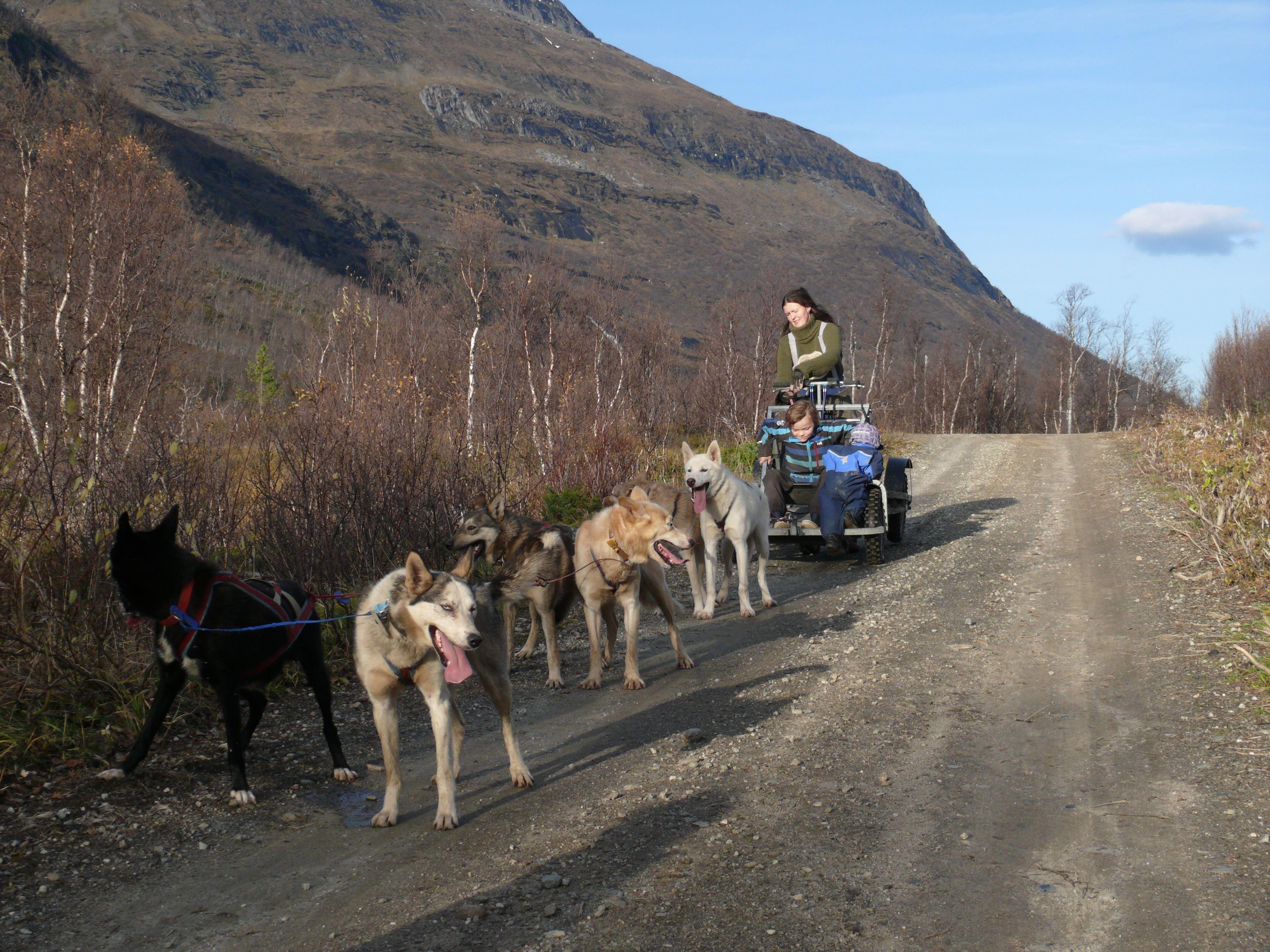 Huskytur med vogn