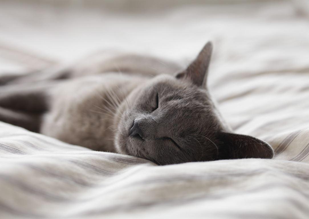 Wellness webinar: Sov dig till god hälsa