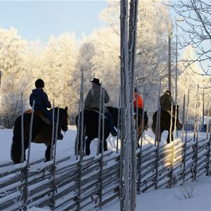Rid i Dalarnas Vildmark - Silverhill Stable