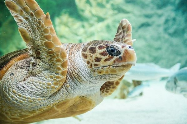 Aquarium - Biarritz