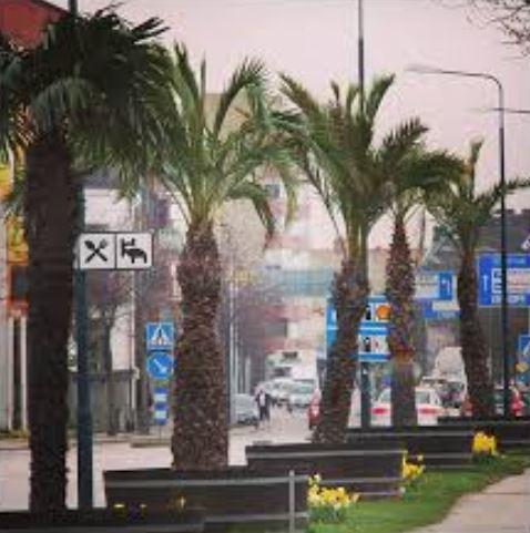 Natursnok och för alla - Palmväxthusen