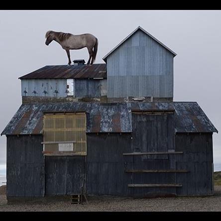 Anastasia Savinova,  © © Anastasia Savinova, Horse on roof