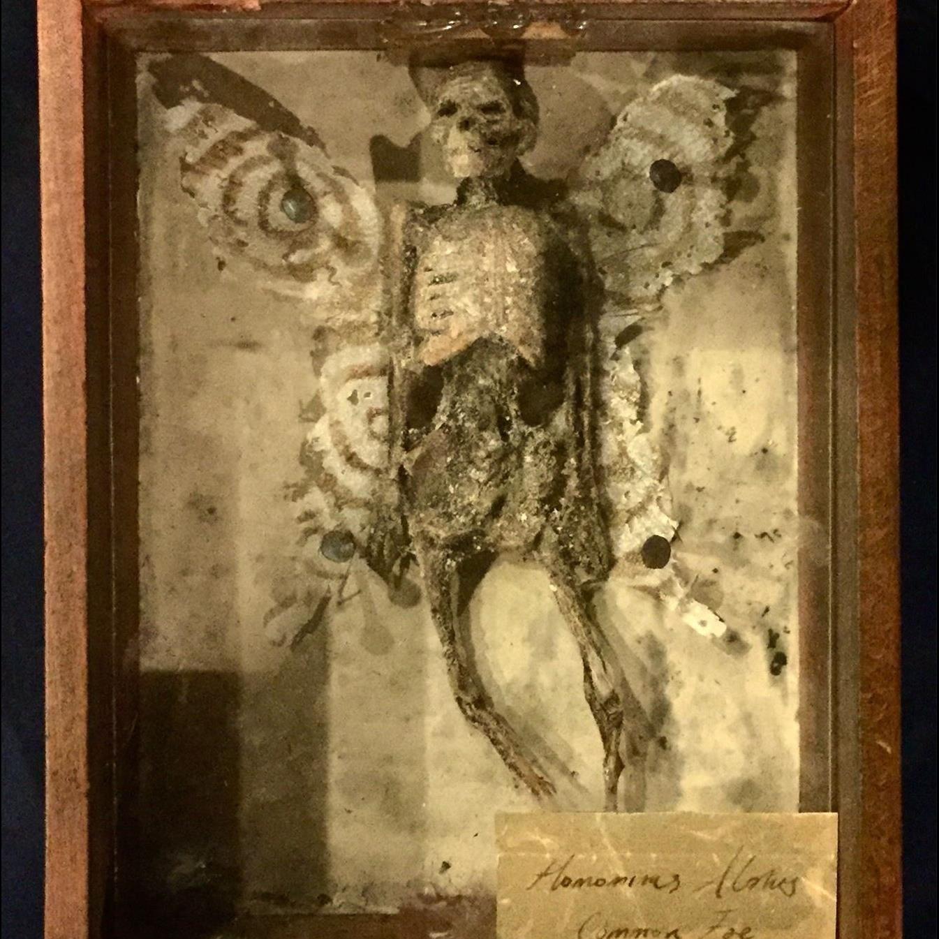 Kontakt til det hinsides - Eksklusiv aftenrundvisning i Museum Obscurum