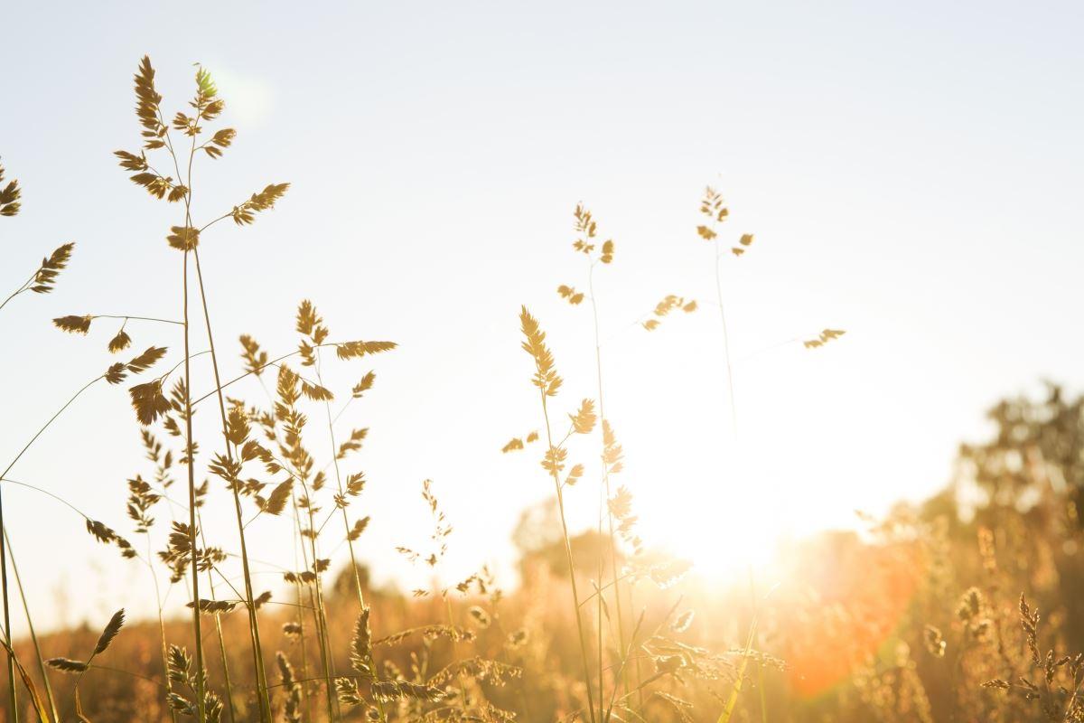 Föreläsning om solenergi - för privatpersoner och bostadsrättsföreningar